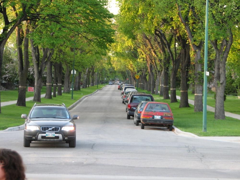 Фотографии Виннипега. Зелёные арки River Heights.